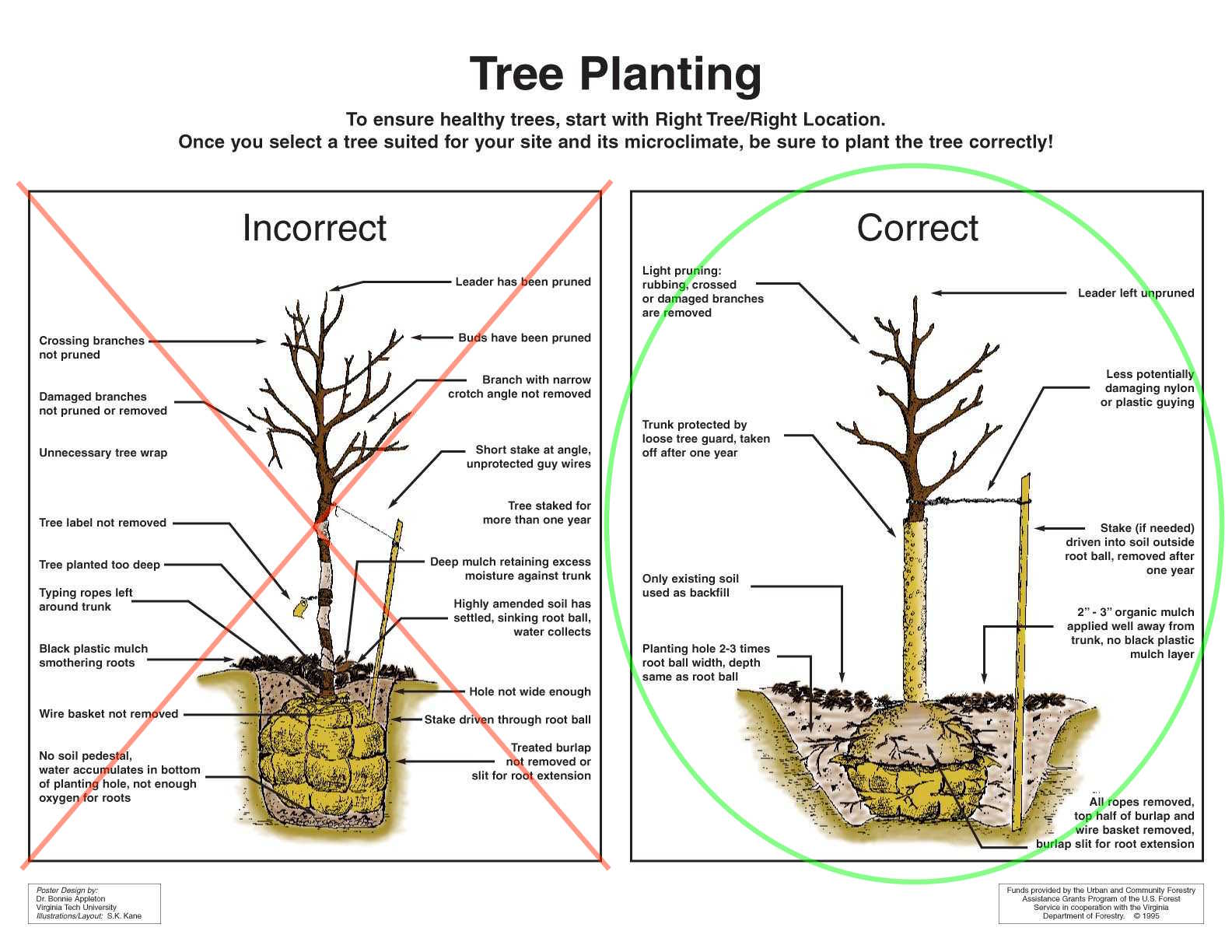 hight resolution of new tree planting care tree tamers inc re tree planting diagram tree planting diagram