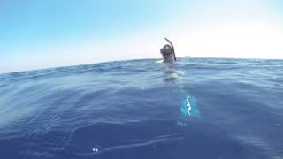 Swimming with blue whale Sri Lanka march 2017