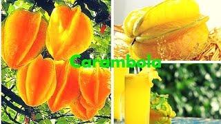 CARAMBOLA: 14 Importantes Propiedades Medicinales para la Salud