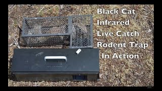 High Tech Trap That ″Swallows″ Rodents Alive. Infrared Black Cat Live Catch Rat Trap In Action.
