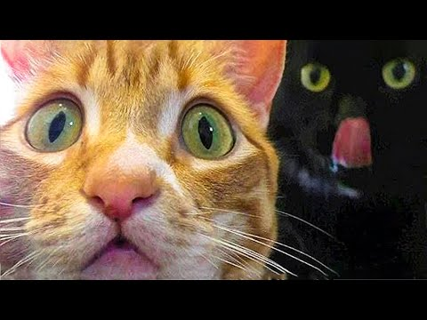 🤣 Funniest 😻Cats And 🐶 Dogs - Try Not To Laugh - Funny Pet Animals' Life 😇