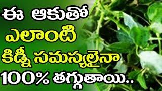 ఈ ఆకుతో ఎలాంటి కిడ్నీ సమస్యలైనా 100 % తగ్గుతాయి..|| Treat Kidney Disease With Leaf vegetable