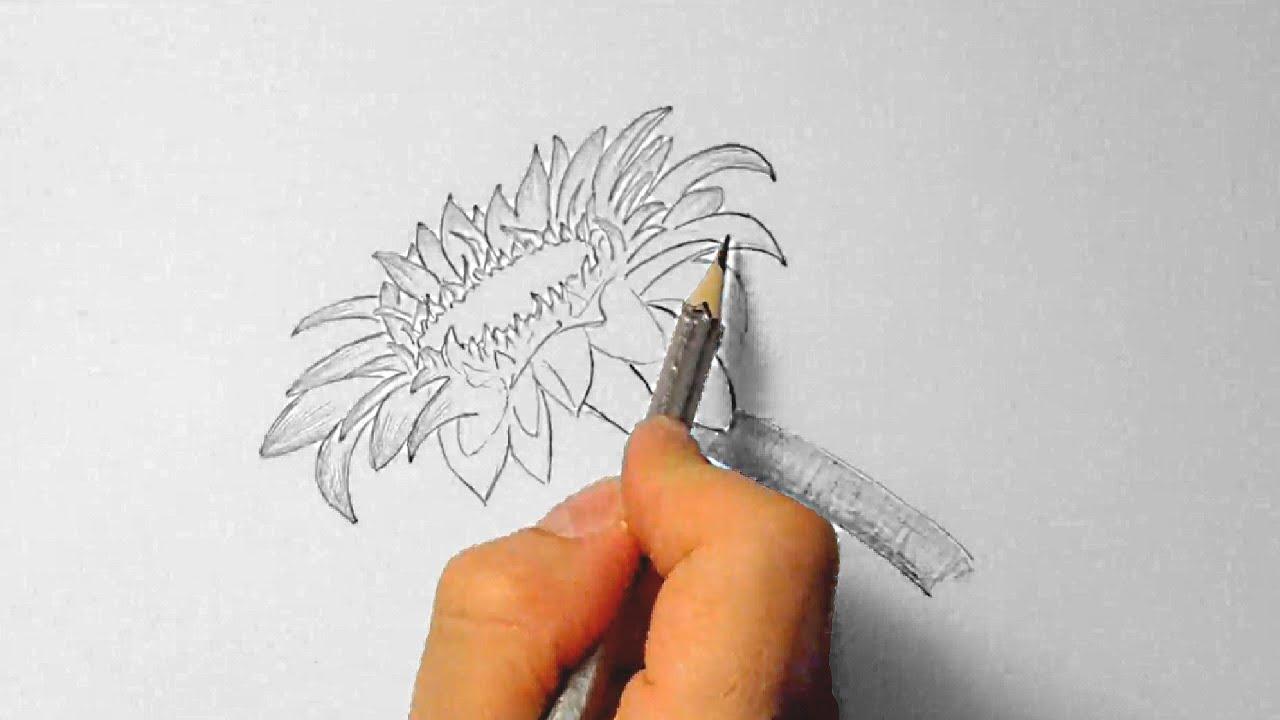 Sonnenblume zeichnen im Zeitraffer Sunflower drawing in