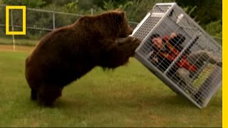 Brown Bear Attack   Dangerous Encounters: Alaska's Bear Country and Beyond