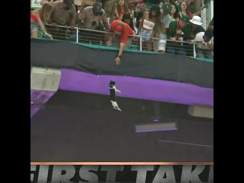 First Take reacts to fans saving a falling cat at Hard Rock Stadium: 'A beautiful moment'   #Shorts