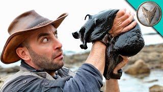 IT'S HUGE! Giant Black Slug!