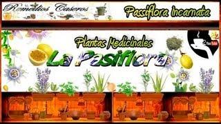 Beneficios de la Pasiflora, Remedio Casero para Dormir, la Ansiedad el Nerviosismo y el Insomnio