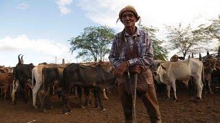 Filme - Missa do Vaqueiro - Agroquima
