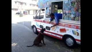 benson wants an ice cream 001