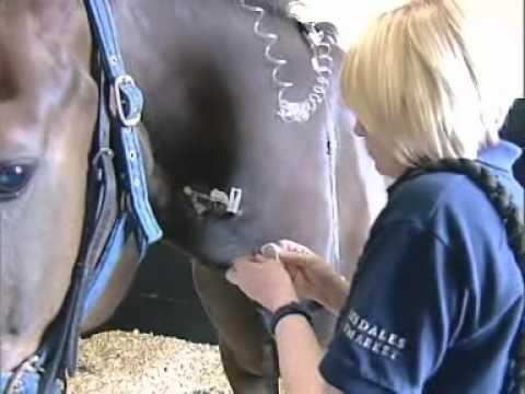 Equine Veterinary Nurse Cover Letter