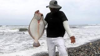 Pescador Pescó Tremendos Peces Planos y usó una caña censilla - en 4K