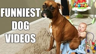 *Try Not To Laugh Challenge* Funny Dogs Compilation [MUST SEE] Funny Dog & Vines 2016