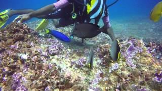 Diving Sri Lanka with Submarine Diving Center, Unawatuna