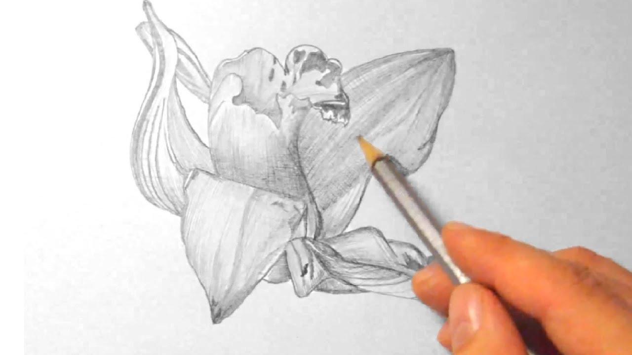 Orchidee zeichnen im Zeitraffer Orchid drawing in fast