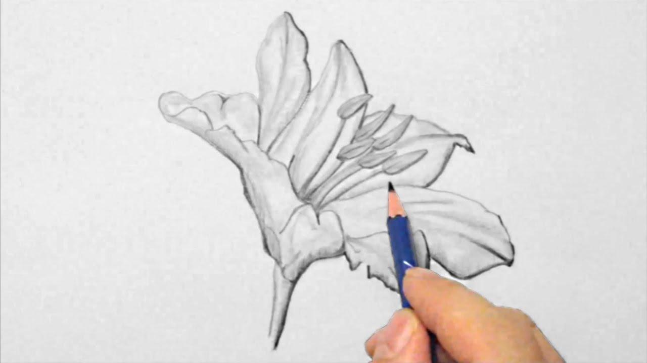 Lilie zeichnen im Zeitraffer Lily drawing in fast