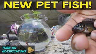Catching Pet Exotic Fish for Aquarium
