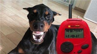 (ENG SUB) 강아지 번역기를 써보았습니다.
