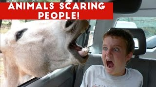 Funniest Animals Scaring People Reactions of 2016 Weekly Compilation   Funny Pet