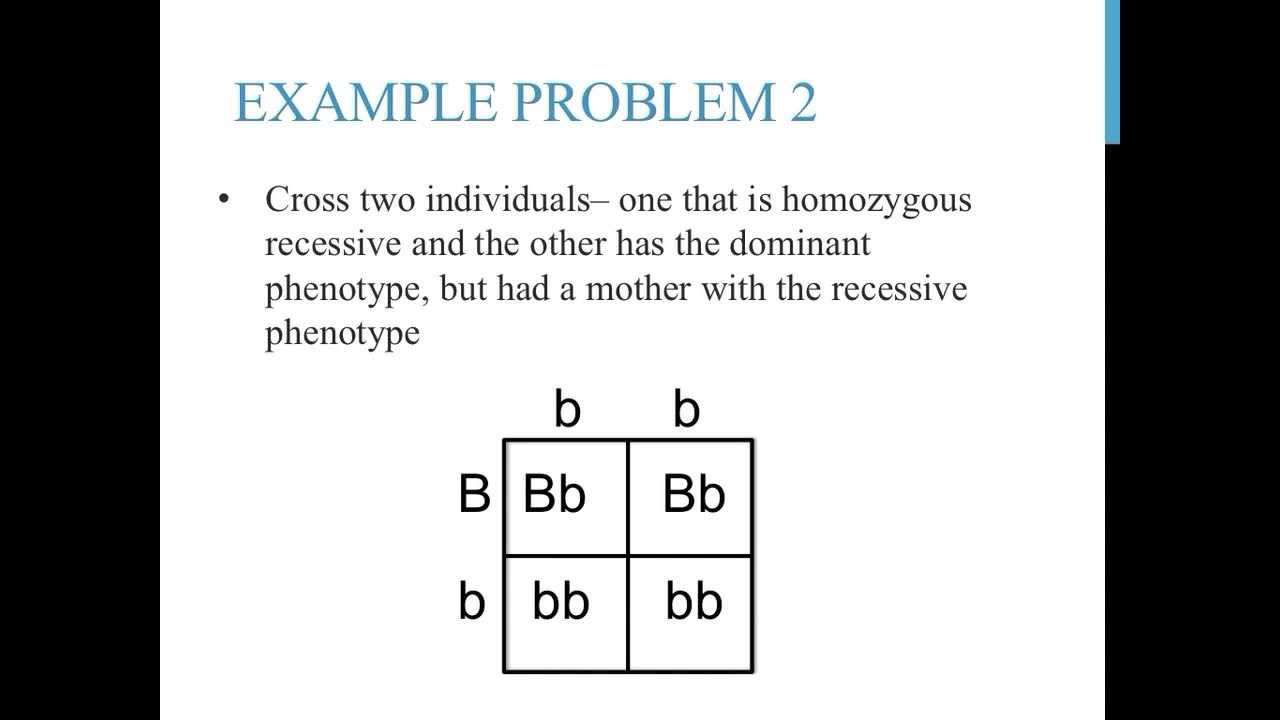 Punnett Square Practice Problems Simple