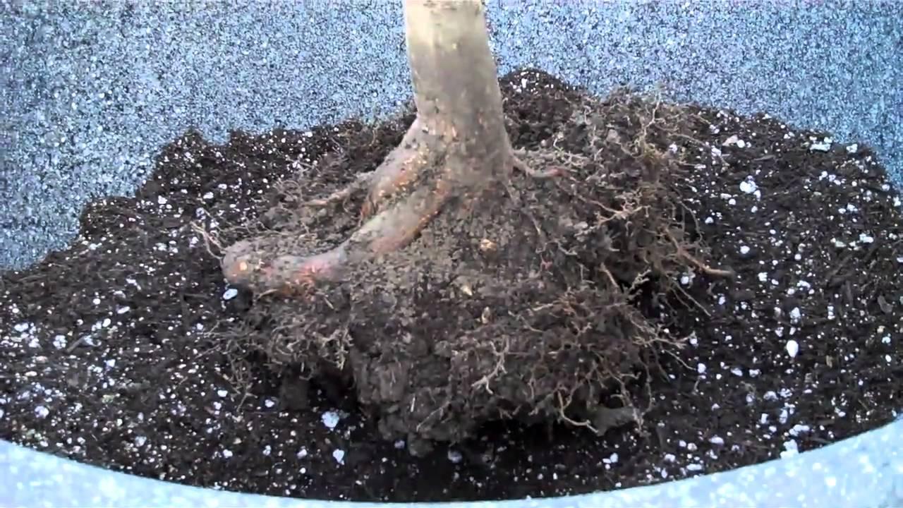 Large Tree Pots