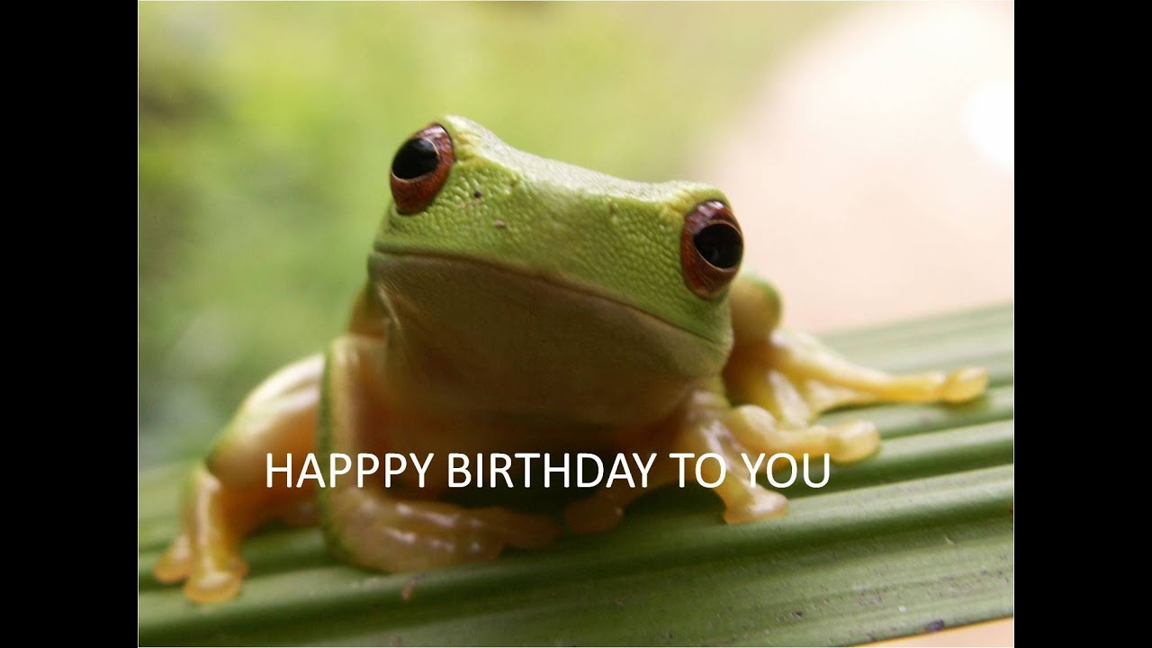 Happy Birthday Frog Birthday