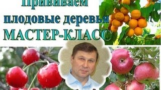 ПРИВИВКА плодовых деревьев, МАСТЕР-КЛАСС + советы