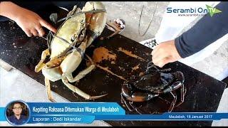 Kepiting Raksasa Ditemukan Warga di Meulaboh