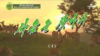 앗! 북한에 이런 일이? 북한 사슴 다큐멘터리의 충격 결말은? l 이제 만나러 갑니다 370회