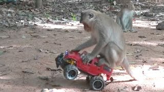 How To Make Fun With Monkeys - Everyday Monkey Funny