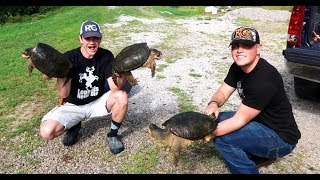 5 SNAPPING TURTLE FEEDING FRENZY!