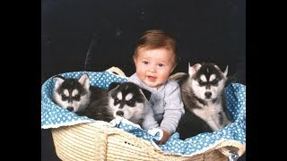 Husky Siberian And Babies Playing Compilation 2016 - Cute Dogs Love Babies