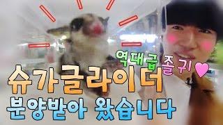 청계천 애완동물거리에서 슈가글라이더 분양!! 첫날!!