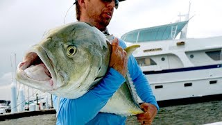 Fishing for Inshore MONSTERS by the Docks