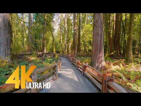 Incredible Nature of British Columbia, Canada - 4K Nature Walking Tour - Short Version