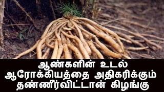 Download How to grow Thanneervittan(Asparagus racemosus) in your