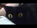 There's absolutely nothing funnier than animals - FUNNY ANIMAL compilation