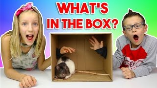 What's in the BOX Challenge!!!!!!