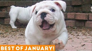 Funniest Pet Reactions & Bloopers of January 2018 | Funny Pet