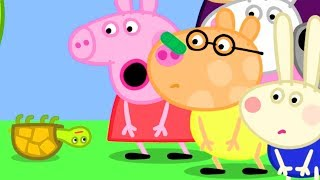 Peppa Pig Official Channel   Tiddles the Tortoise Falls on Pedro's Nose