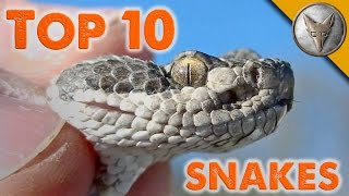 Top 10 Snake Encounters!