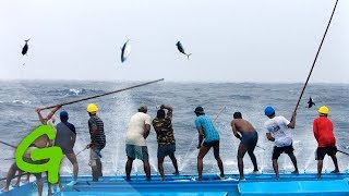 Catching tuna Maldivian style