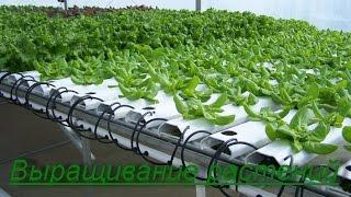 Гидропоника. Выращивание растений в домашних условиях. Бизнес идея.
