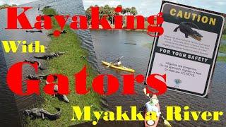 Kayaking with Alligators on the Myakka River - Florida