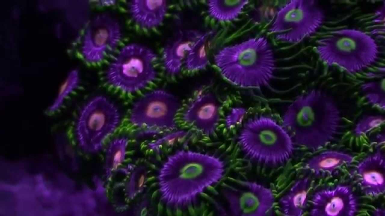 Beautiful Coral Reef Tank  YouTube