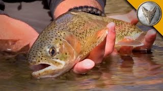 Rainbow Trout Rescue Mission!