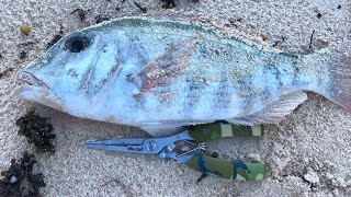 s18ep4- Fishing in Mauritius at Pointe aux Piments