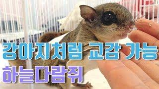 [2편]동물농장 천재 강아지 호야처럼! 교감 가능한 하늘다람쥐 ⊙0⊙