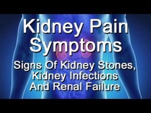 Kidney Pain Symptoms  Signs Of Kidney Stones, Kidney