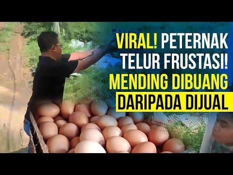 Peternak Telur Frustasi, Hasil Panen Mending Dibuangin