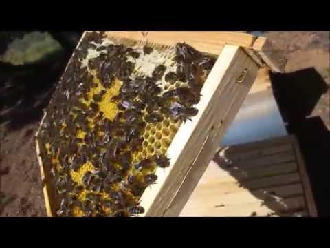 O meu primeiro apiário - www.enxames.com